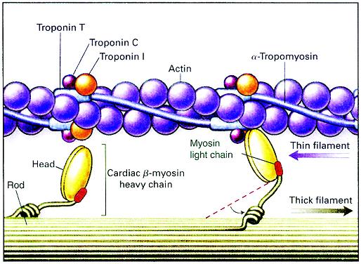 九种离子结构示意图