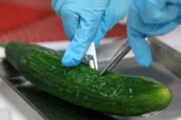 germany-e-coli-ehec-cucumber-contamination-01